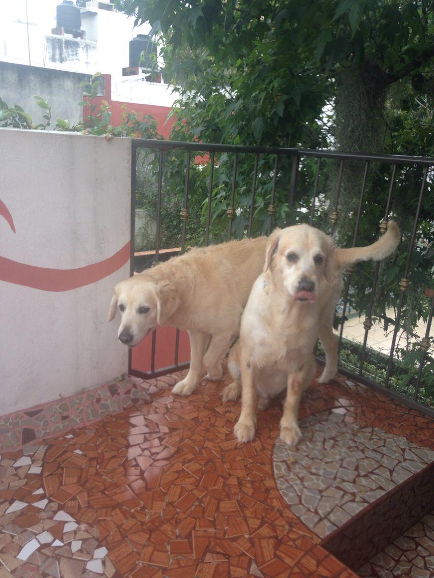 Nuestras mascotas.
