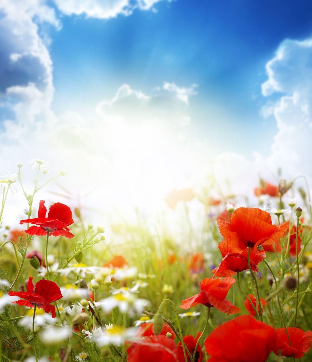 Flower Wallpaper, Beautiful Images