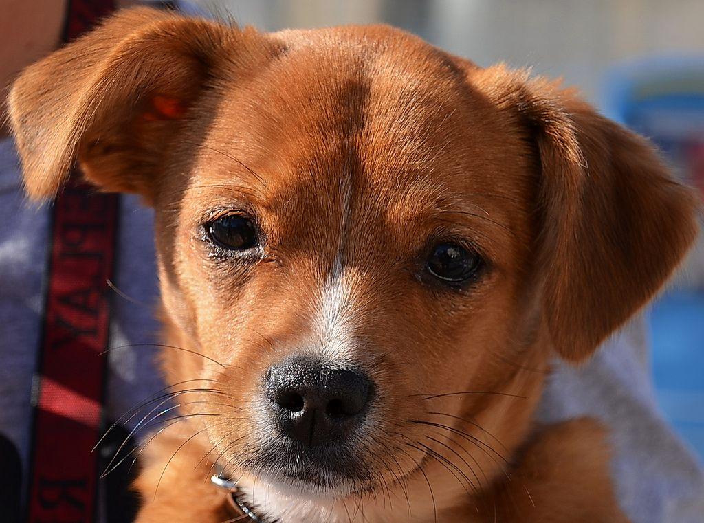 Dog best pet insurance animal shelter fundraiser pet