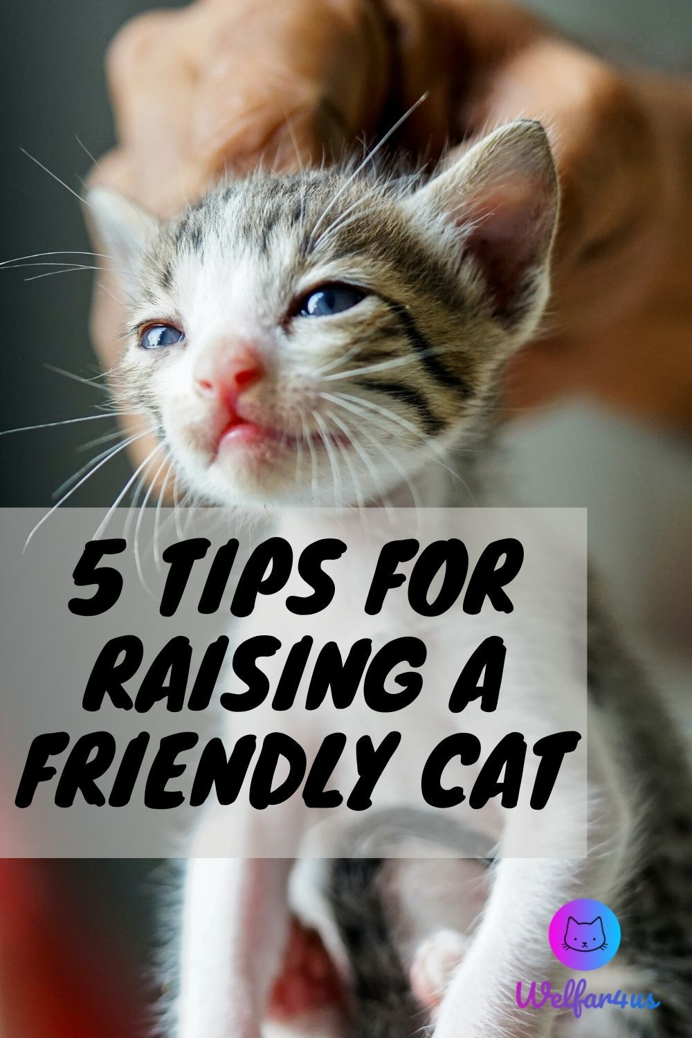 5 Tips For Raising A Friendly Cat Welfar4us In 2020 Cats Cute Cats And Dogs Cute Cats And Kittens