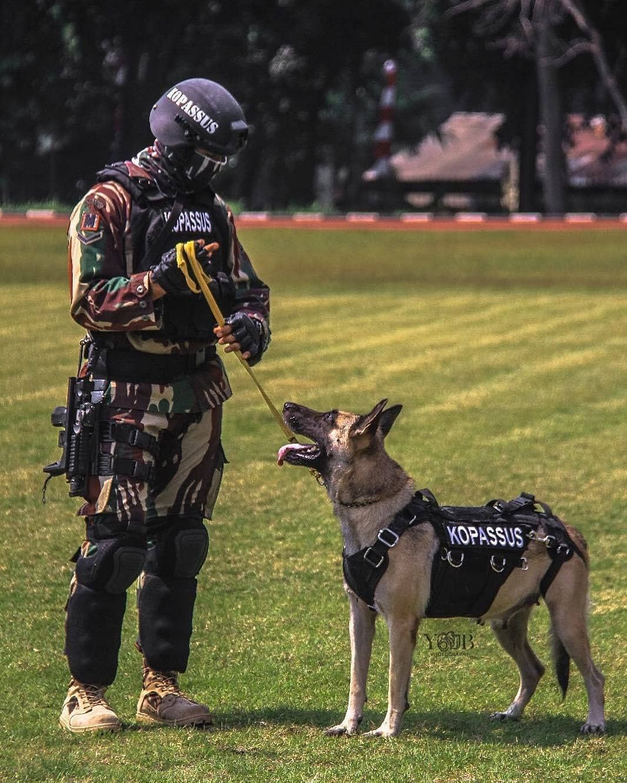 "Militer indonesia.🇮🇩 on Instagram: ""Special unit K9 Kopassus . . . #TNI #militerindonesia #military #militer #indonesia #kostrad #tniad #tniau #tnial #pasukankhusus #komando…"""