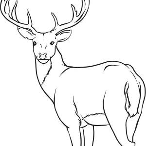 Deer Coloring Page For Kids Deer Coloring Pages Animal Outline Deer Drawing