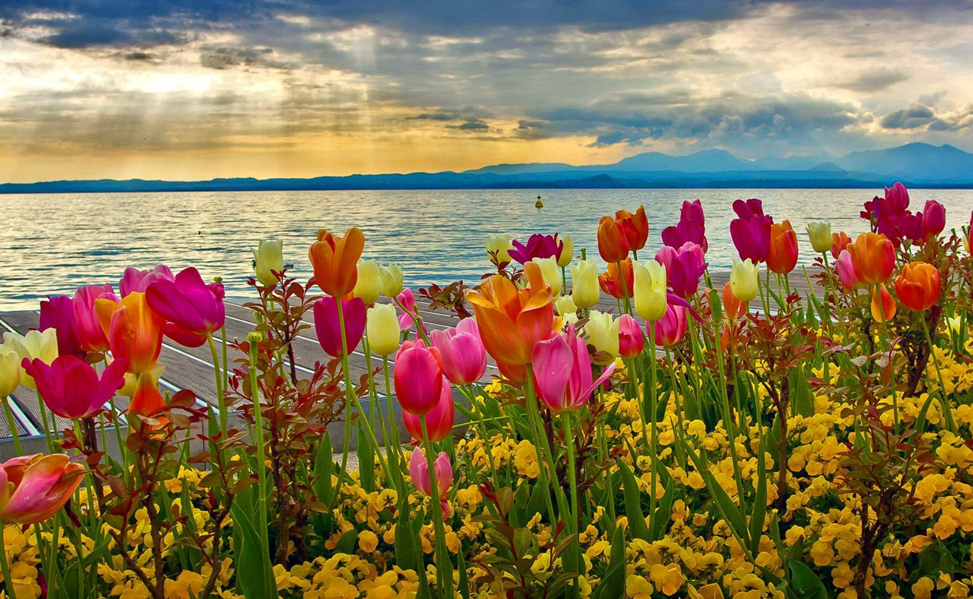 Spring Wallpapers Wide With Wallpaper High Resolution 1920x1182 Px