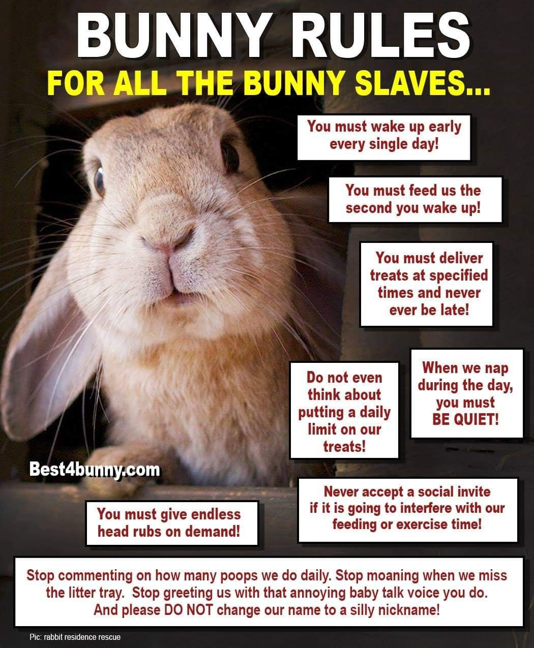 Pin By Jenny Hudson Hendron On Pets Bunny Mom Rabbit Care Bunny Care