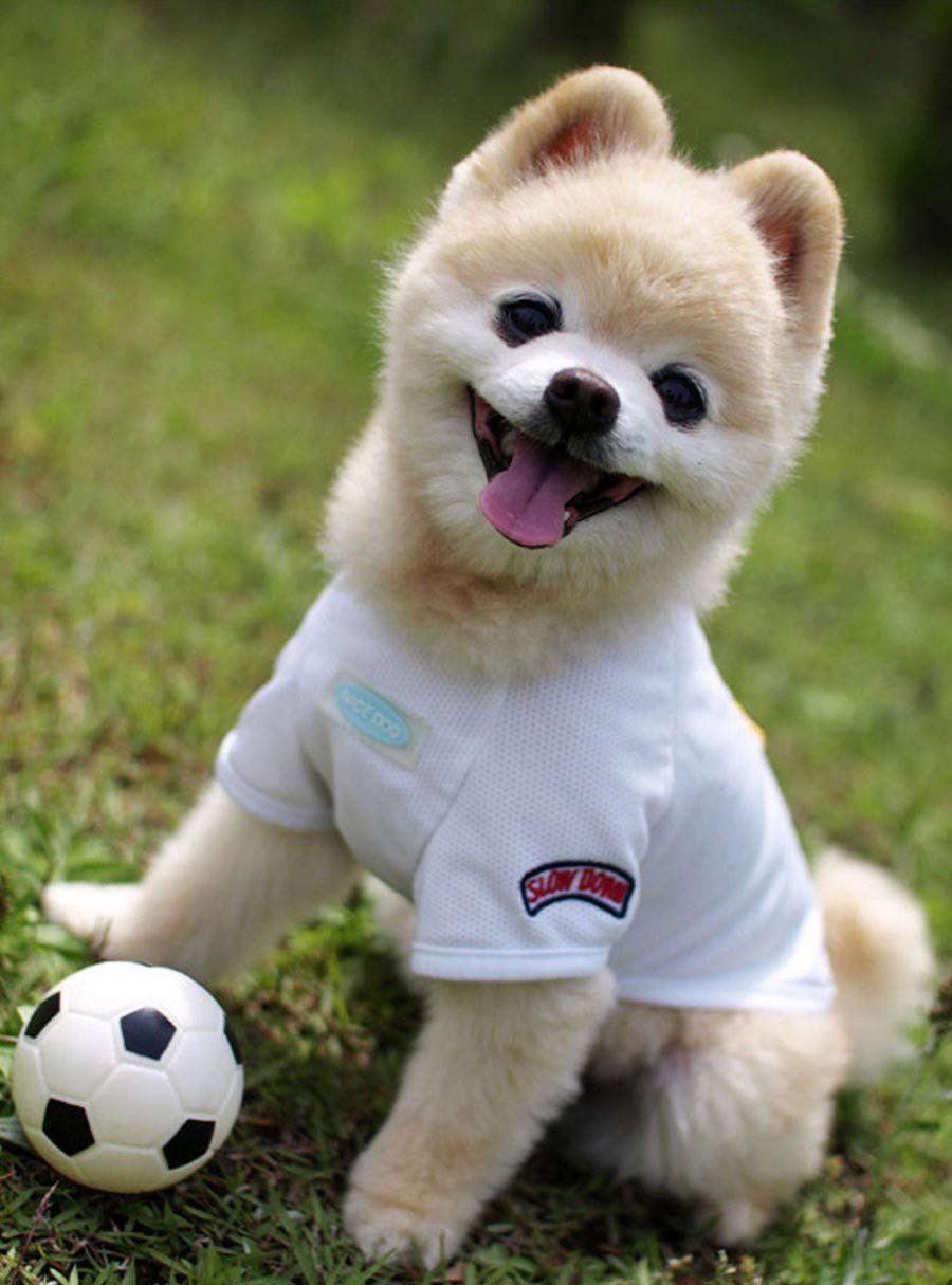 Cutie pie cute dogs cute animals cute dog pictures