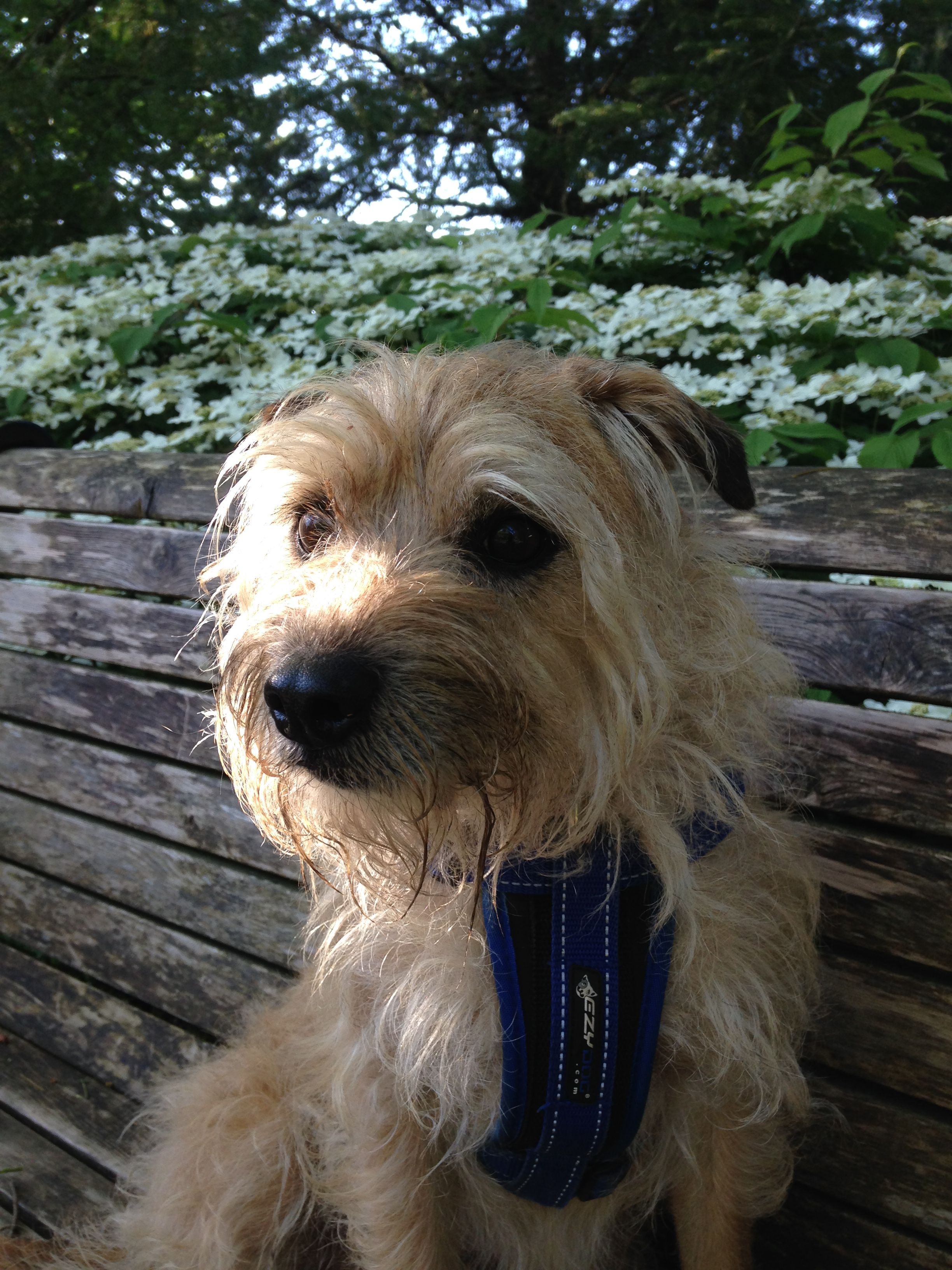 Pin By Dan Williams On Cairn With Images Terrier Mix Dogs