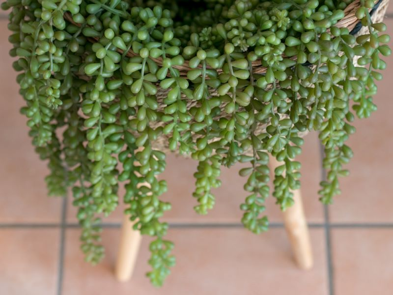 Luxe Artificial Plants For Home Decor That Look As Good As The Real Thing Artificial Succulent Plants Plants For Hanging Baskets Artificial Succulents