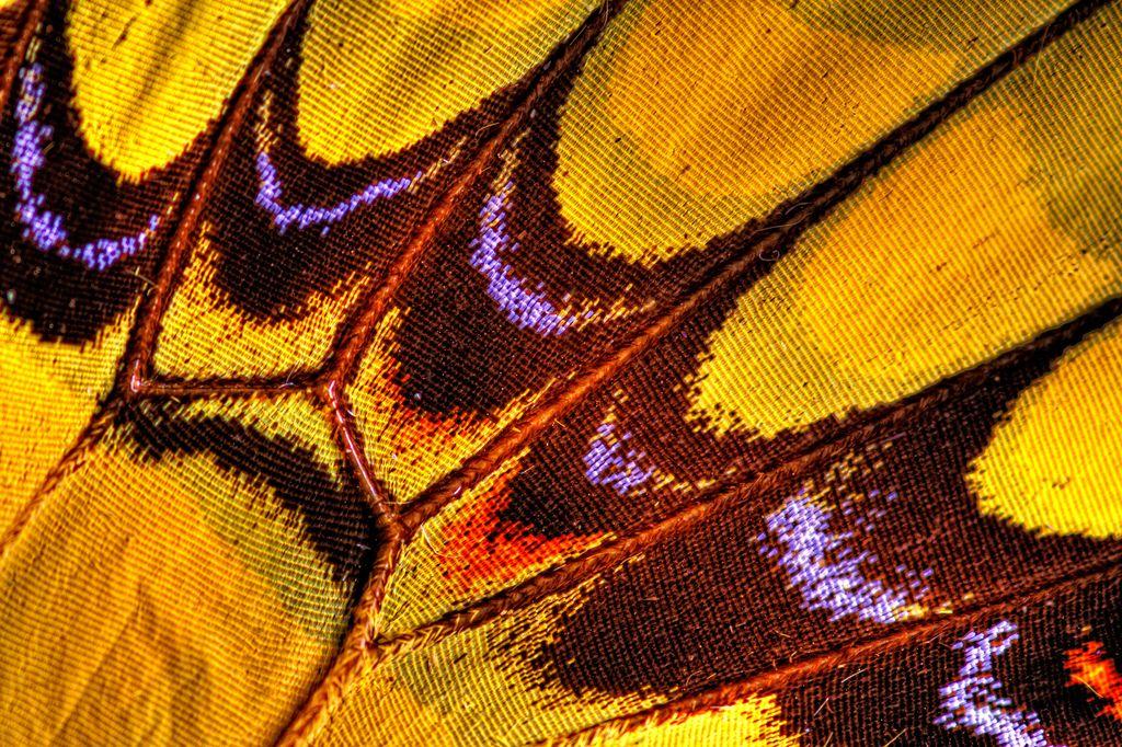 Butterfly Wing 3 Butterfly Wings Wings Beautiful Butterflies