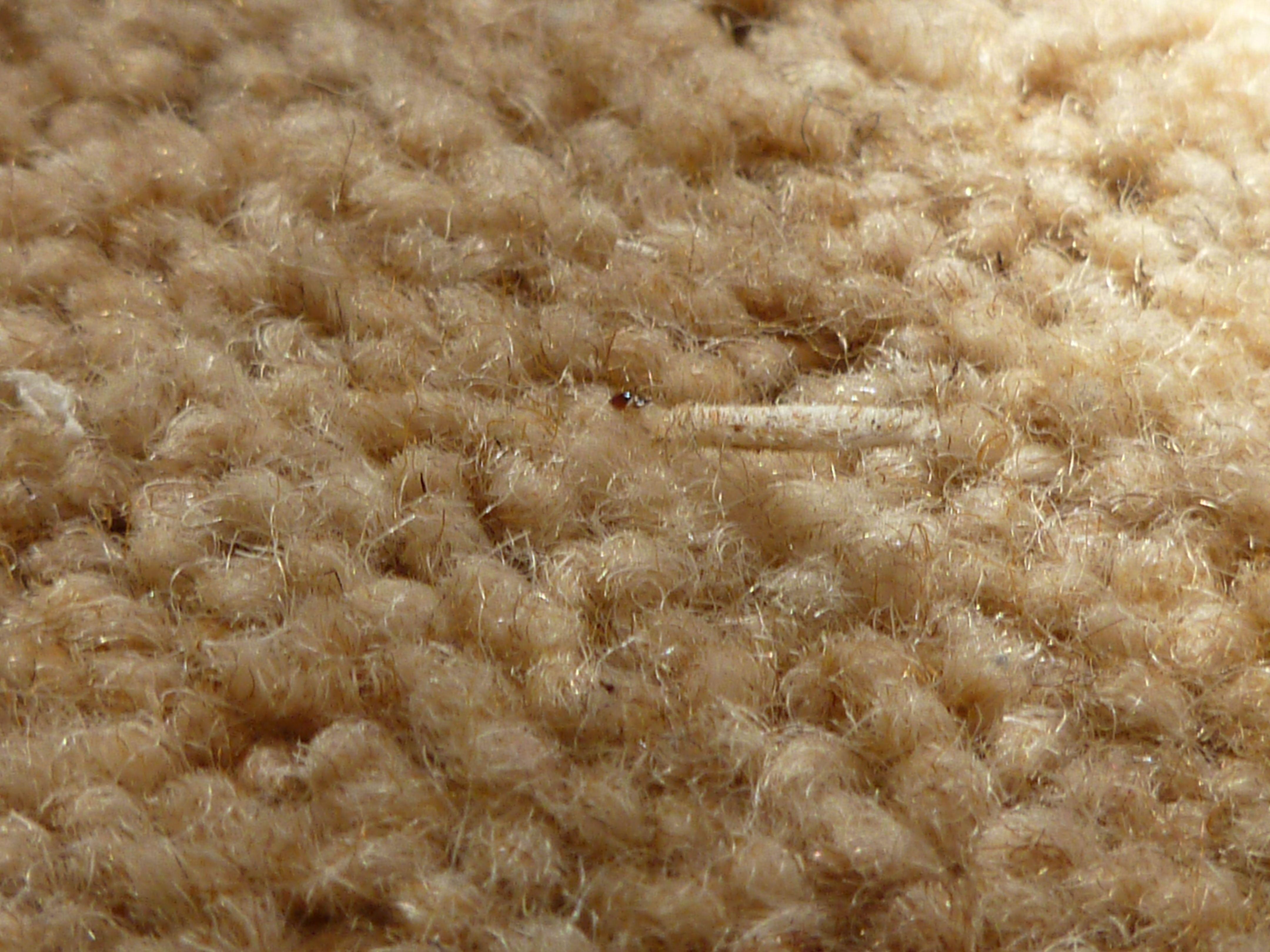 Rug Moth Larvae Tucking Into An Expensive Wool Carpet
