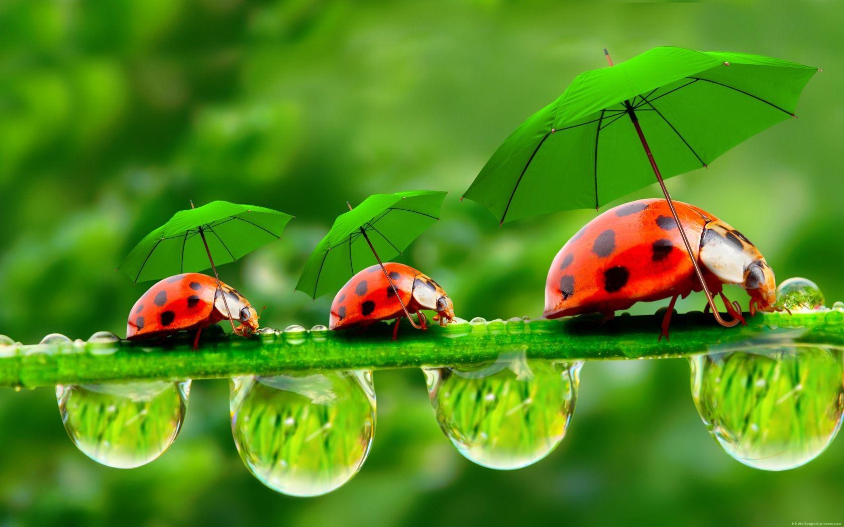 Ladybugs With Green Umbrellas HD Wallpaper
