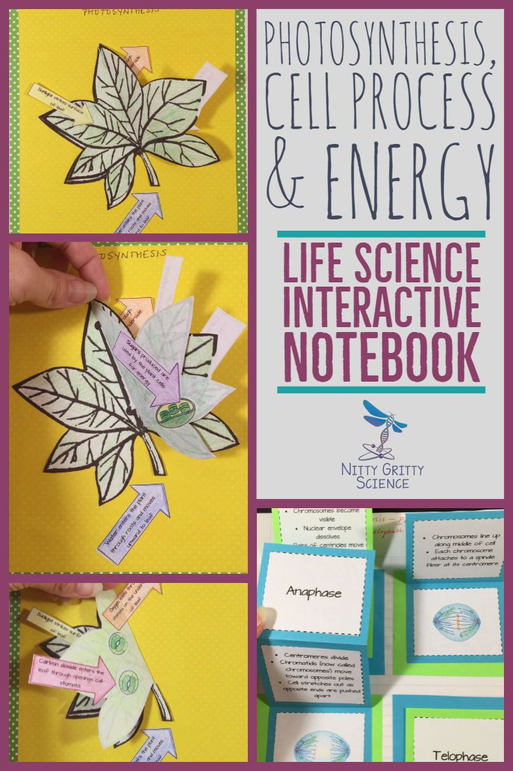Photosynthesis, Cell Processes & Energy Science