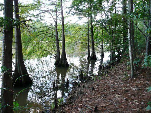 Photo of Cypress Trees, Lake Houston, East End Park ...