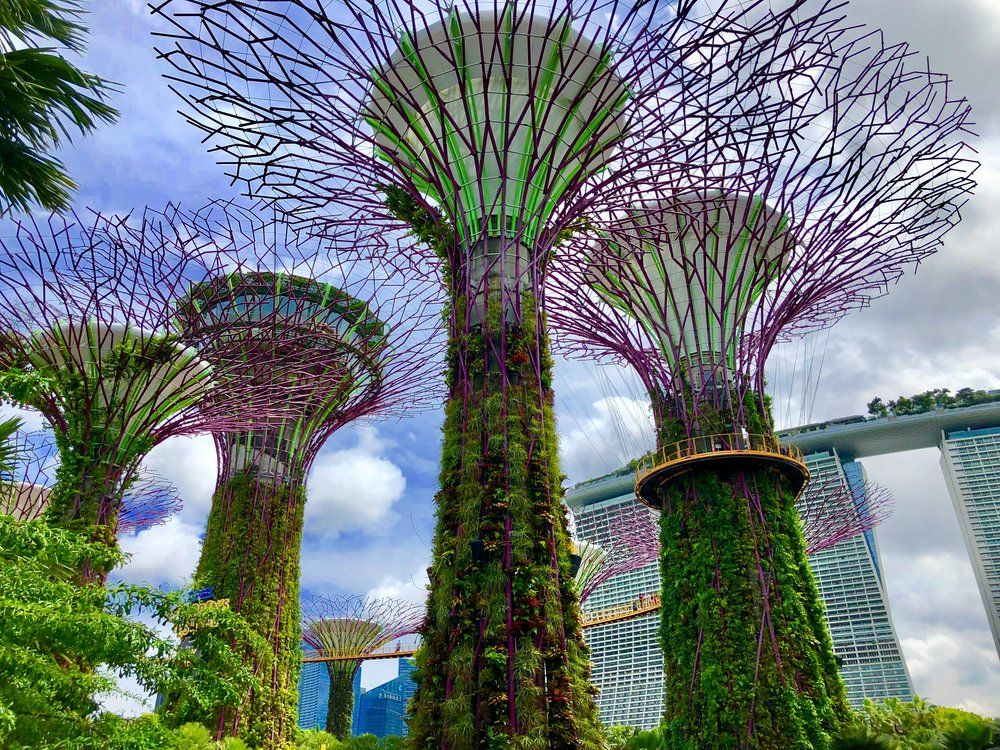 718a63f0368e9f0c1f2195bd1ad9d79d - Gardens By The Bay Singapore On Budget