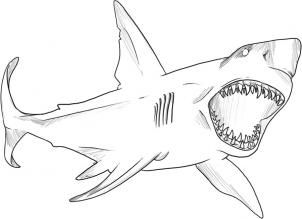 How To Draw A Great White Shark By Dawn Risunok Akuly Akula