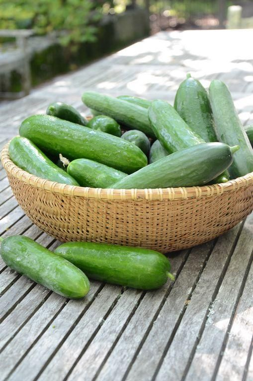 For some people, the only reason to grow cucumbers is to make pickles. I love pickles, but if I barely have time to pick my cucumbers, I definitely don't