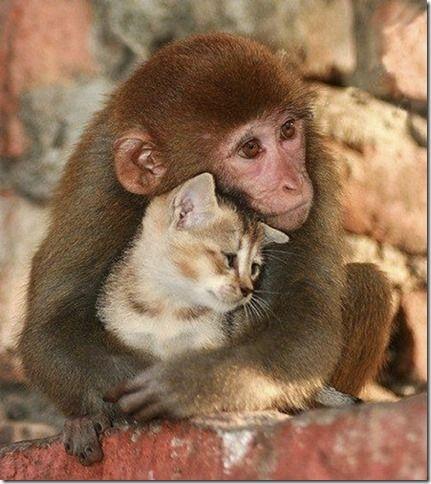De belles images d'amitié 718af5f6048e4e52fc974e287855fef0