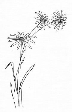 Simple daisy drawing free flower templates and designs for Flower line drawing tumblr