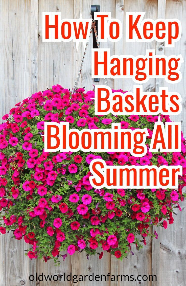 How To Rejuvenate Worn Out Hanging Baskets And Potted Crops