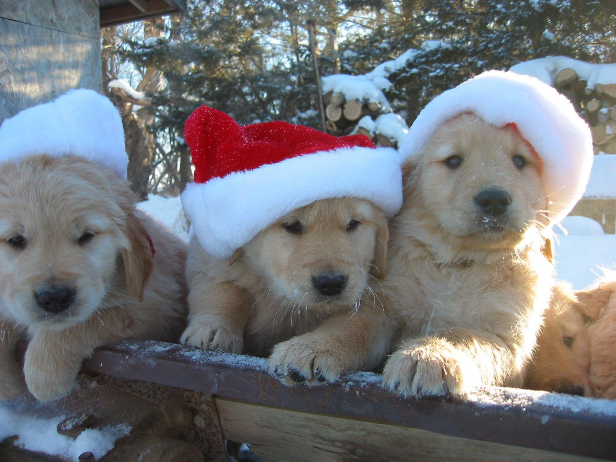 Beneficent volunteered dog lovers rush today golden