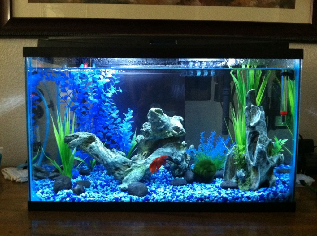 ImageUploadedByFish Lore Aquarium Fish Forum1399479097 ... 10 Gallon Fish Tank Ideas