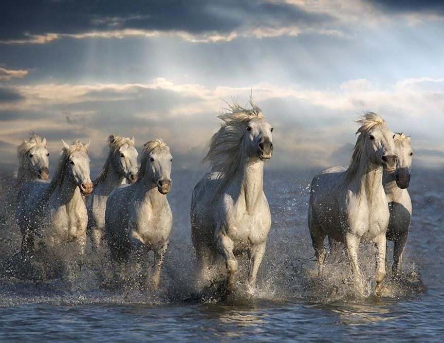 Horses On The Camargue - Poem by Roy Campbell