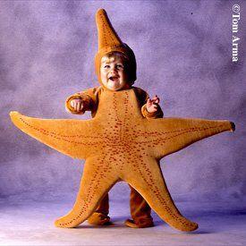 disfraz de estrella de mar - Buscar con Google