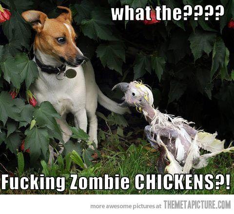 Zombie birds…