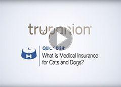 Cat Health Insurance For Accident Illness Trupanion Pet Insurance Reviews Pet Clinic Dog Insurance
