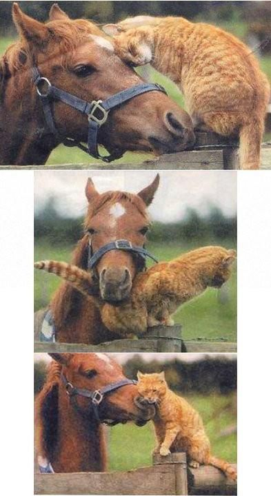 Awe, Kitty rubbing on sweet horse. Animal friends!