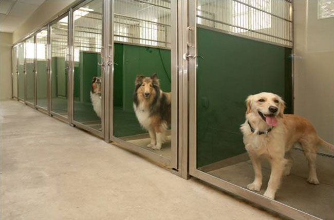 Bda Architecture Pet Boarding Dog Kennel Dog Kennel Outdoor
