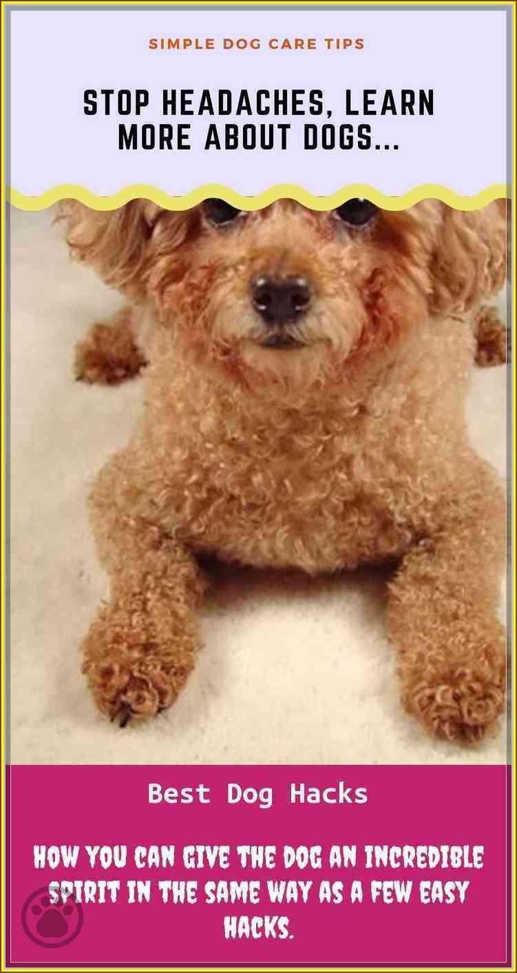 If You Have A Dog Don T Miss This Dog Hacks Dog Hacks Dog Care Dog Care Tips