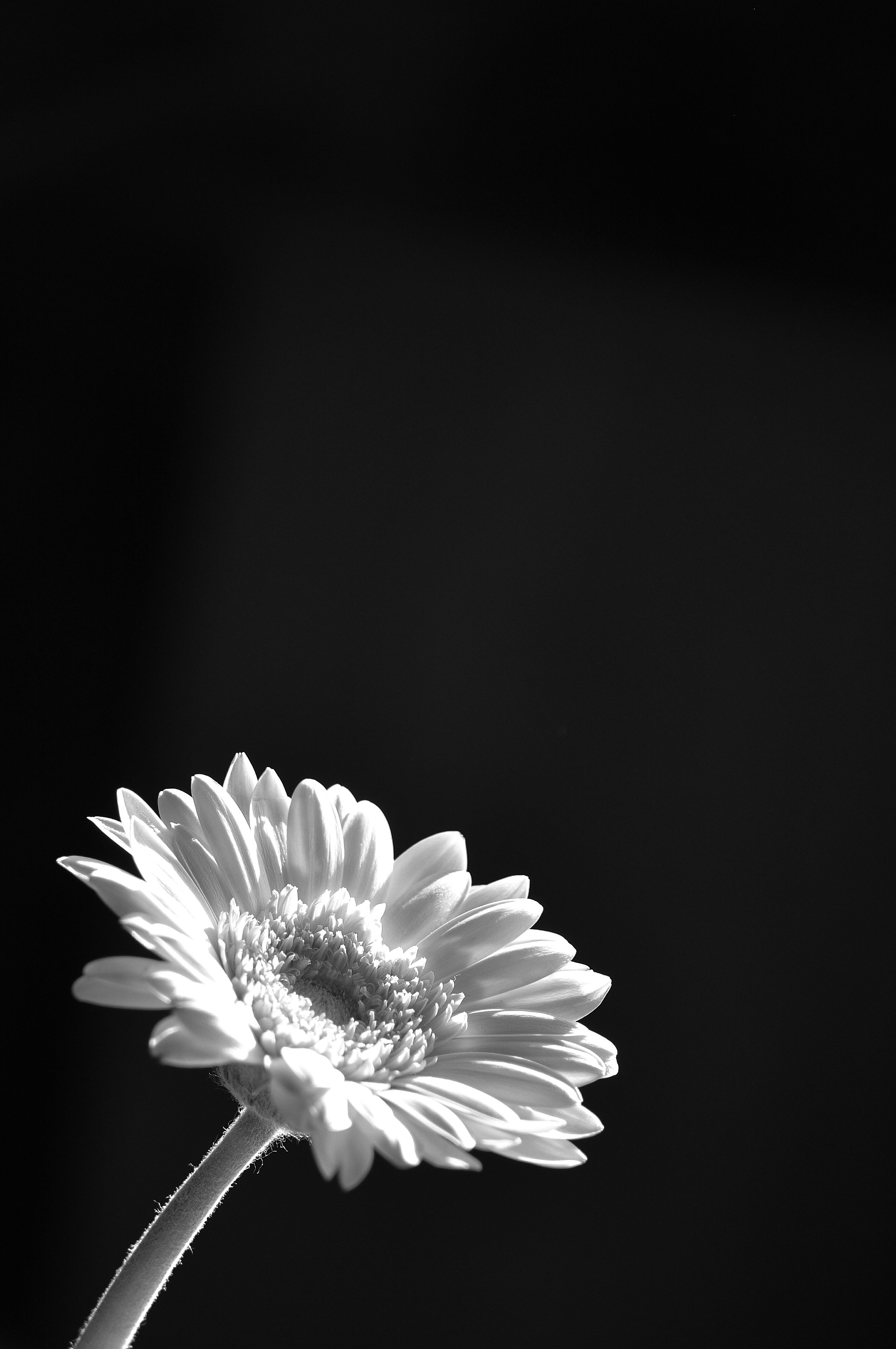 Pin By Jude On Floral Pinterest Flowers Photography And Black