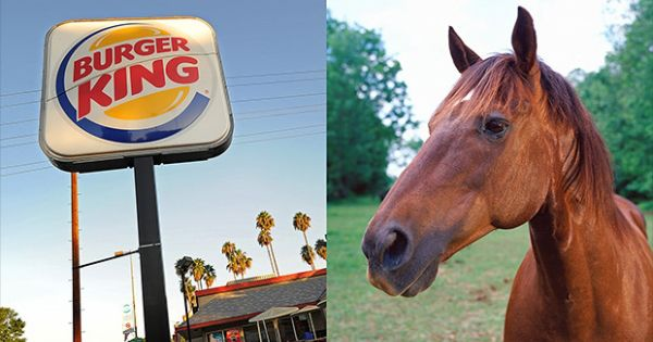 Burger King Admits to Selling Whoppers Containing Horse Meat  http://madworldnews.com/burger-king-horse-meat/