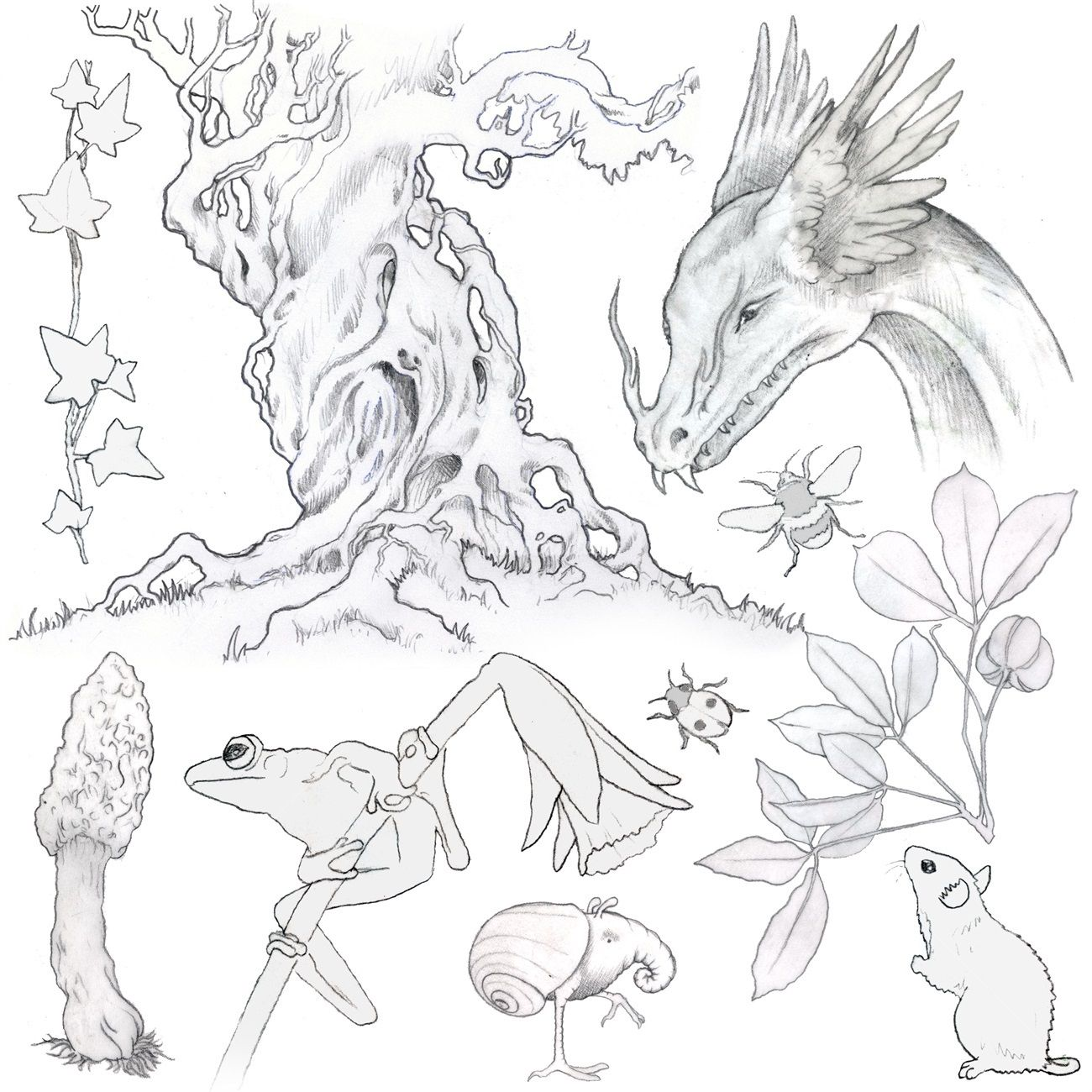 Aquatic Wetland And Invasive Plants Line Drawings