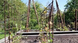 Man kan lave snore der er forbundet fra klatreplantens stativ, og så hele vejen som et net over til krydderurterterne. På den måde skjuler man kommunens boliger :)