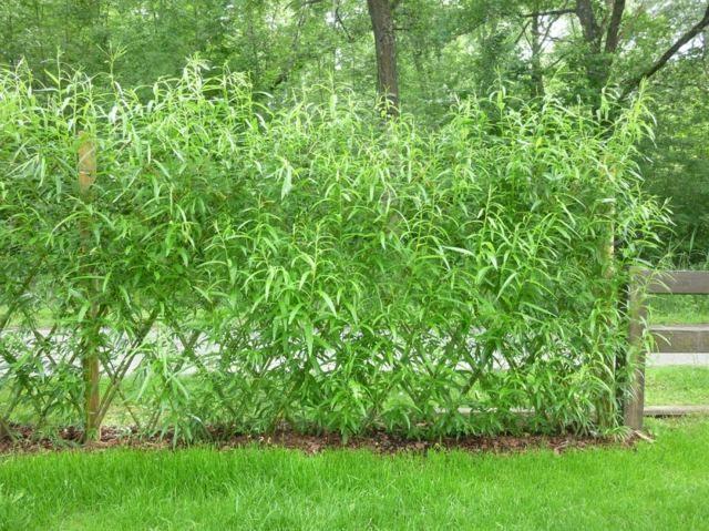 Clôture de jardin, il y en a pour tous les goûts !   Gates and Fences