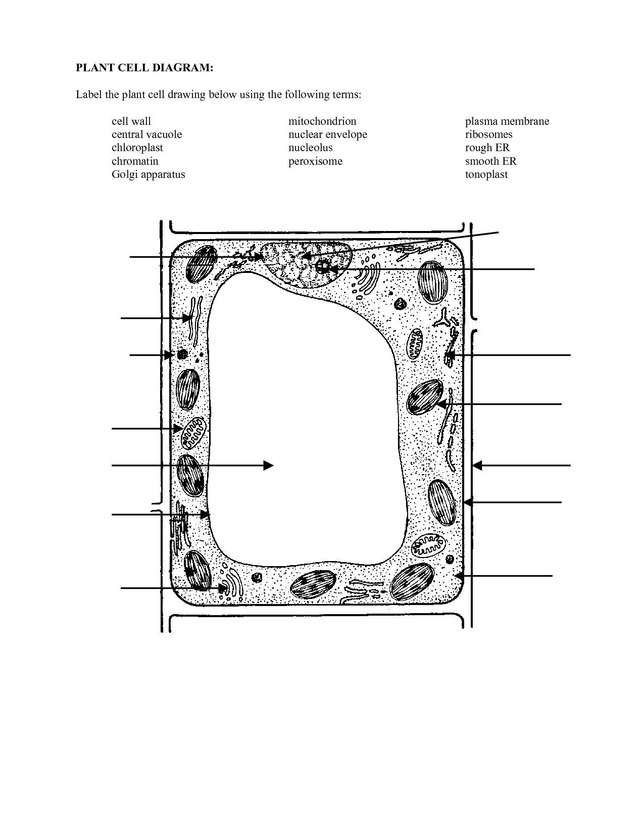 Blank Plant Cell Diagram Worksheet Beautiful 16 Best Of