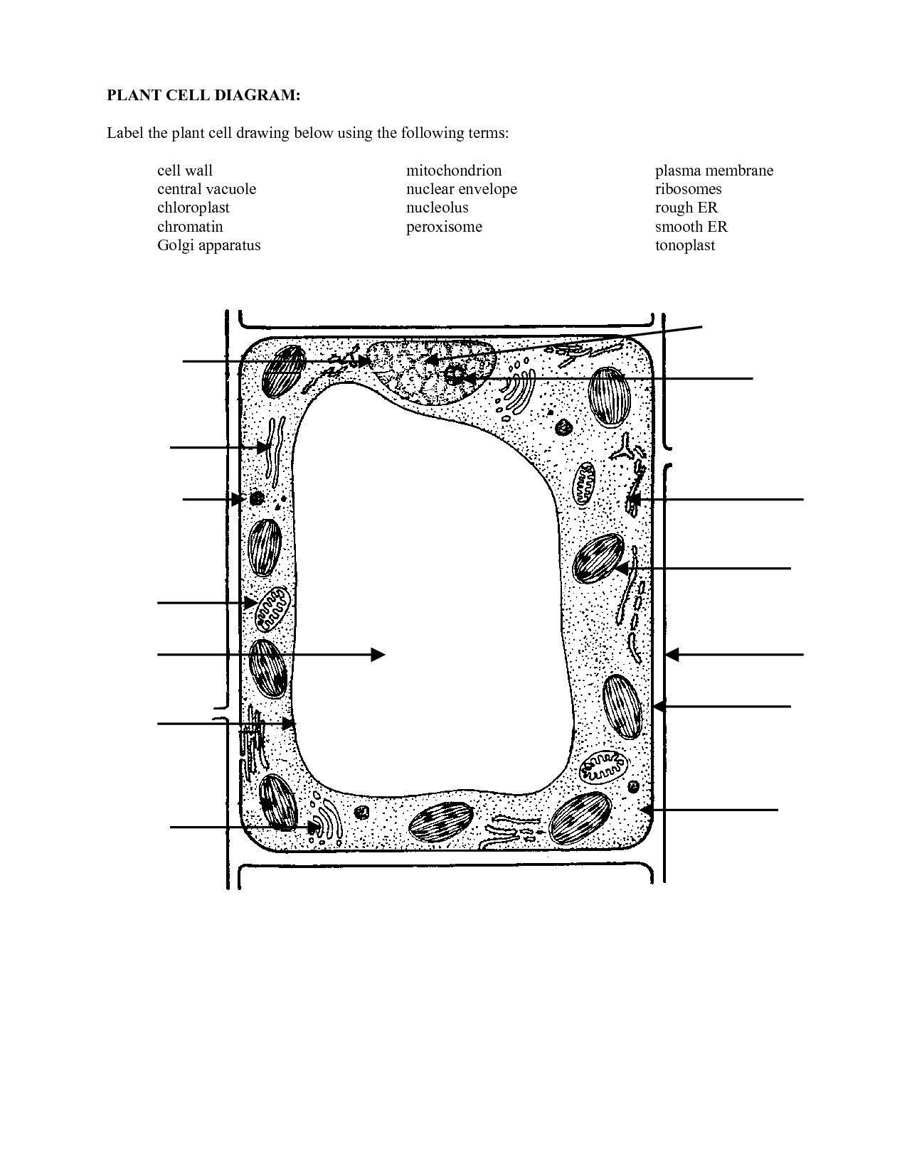 Blank Plant Cell Diagram Worksheet Beautiful 16 Best Of