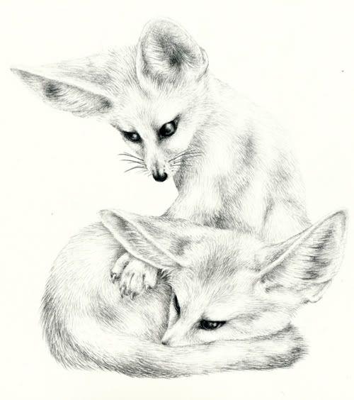fennec fox coloring page - cute fennec fox drawing