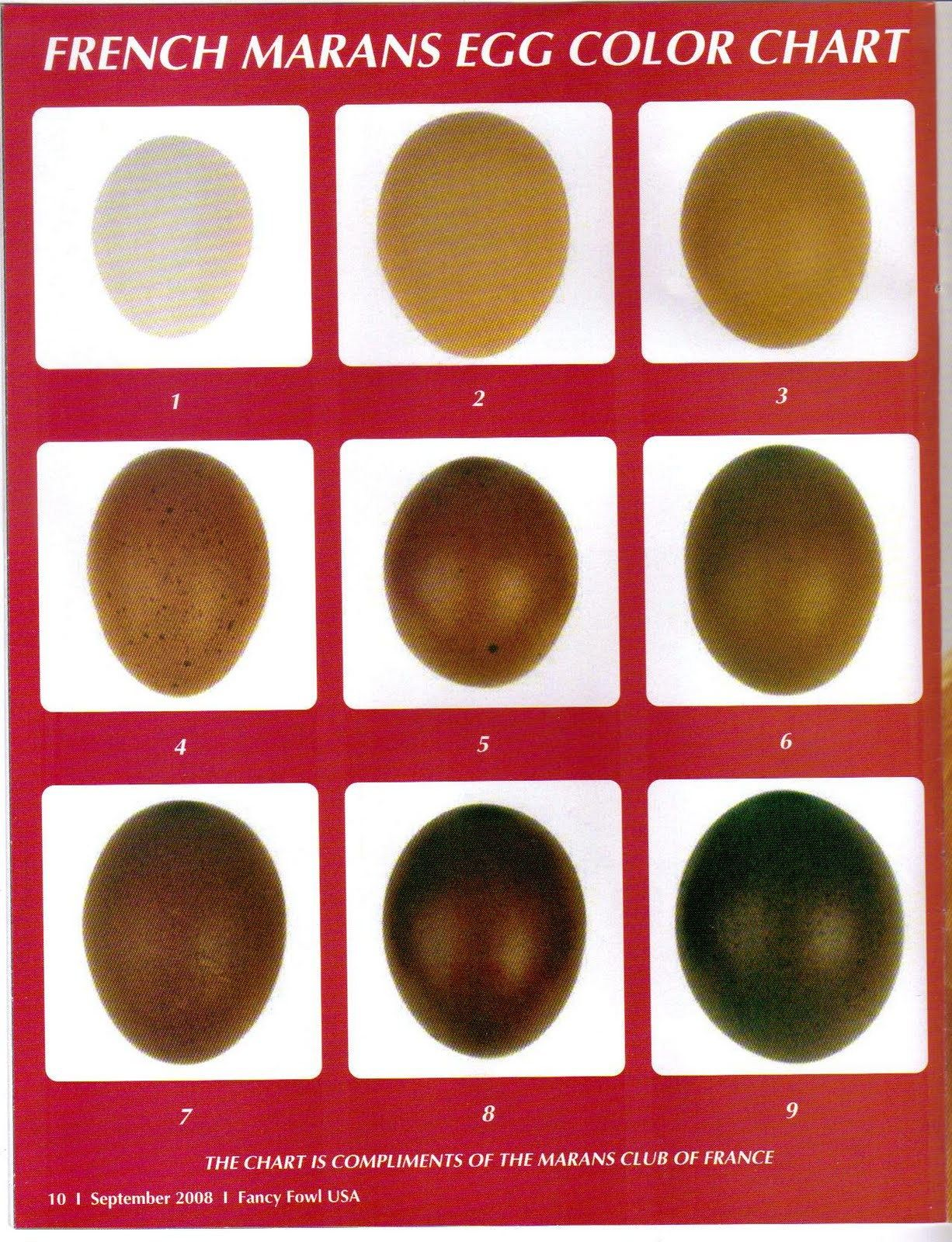 Marans egg color chart