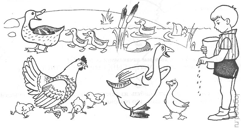 также птичий двор раскраска для малышей методом