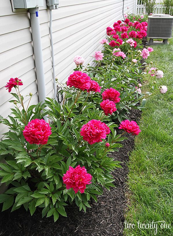 27 Gorgeous and Creative Flower Bed Ideas to Try Peony flower