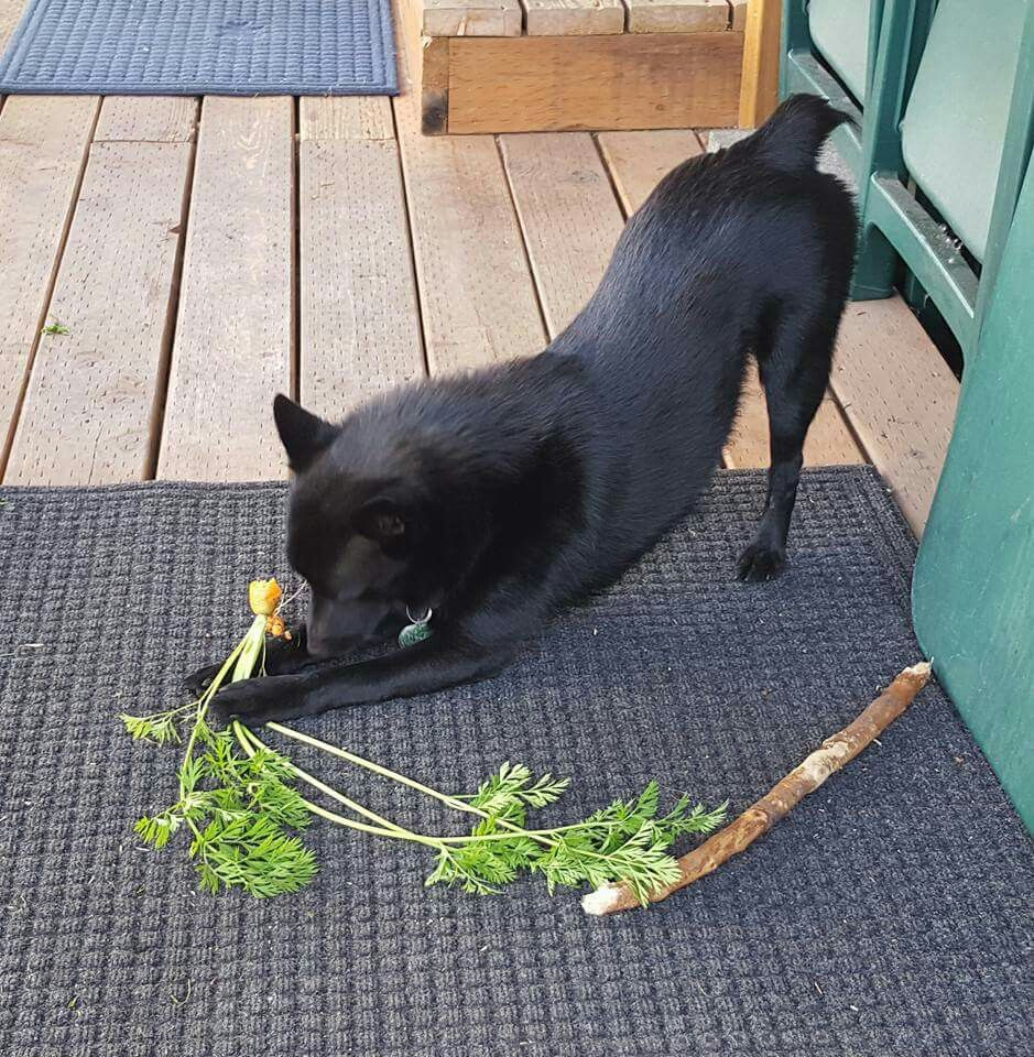 Carrots nummy! And this is my favorite stick, too