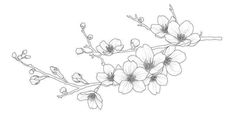 Tips For Creating Inspiring Illustrations Of Cherry Blossoms Cherry Blossom Drawing Cherry Blossom Art Cherry Blossoms Illustration