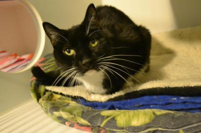 Chico Is A Handsome 11 Year Old 4 Paw Declawed Cat Who Was Abandoned At A Nyc Kill Shelter A Few Months Ago Now He Is Safe And Soun Cat Adoption Cats Purring