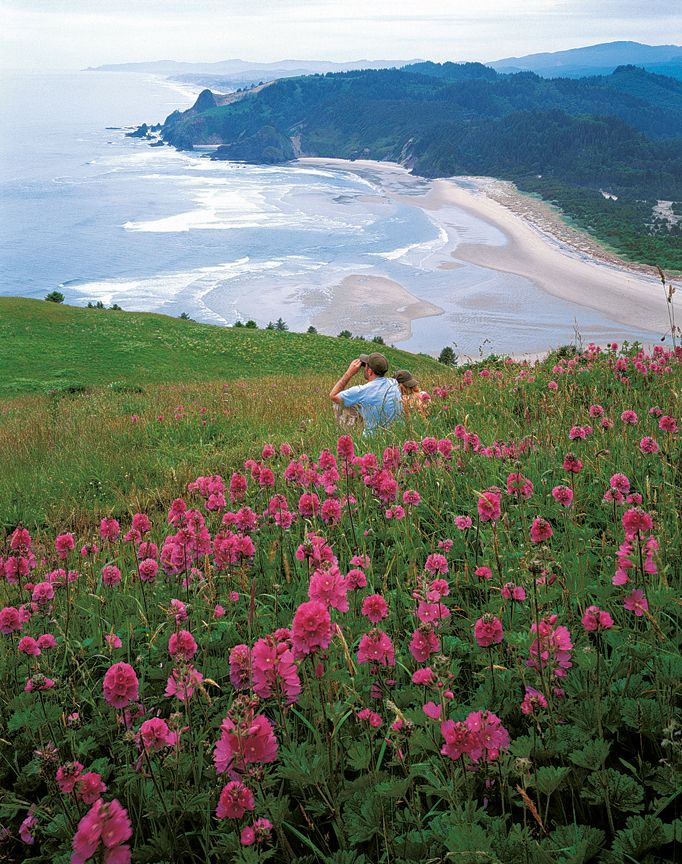 Pacific Coast Scenic Byway | Pacific Coast Highway Oregon #traveloregon