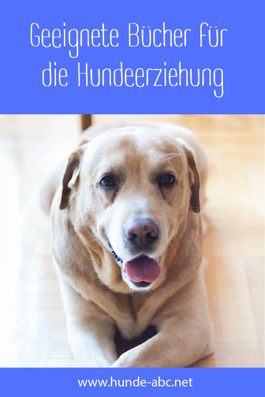 Pin Auf Hunde Welpen
