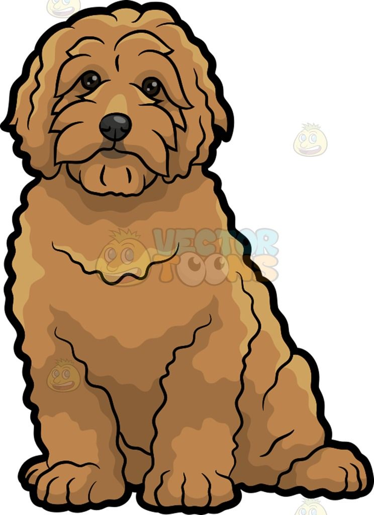 A Very Cute Golden Doodle Dog A Dog With Curly Brown Fur