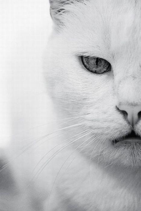 Cats (136 photos) (8)
