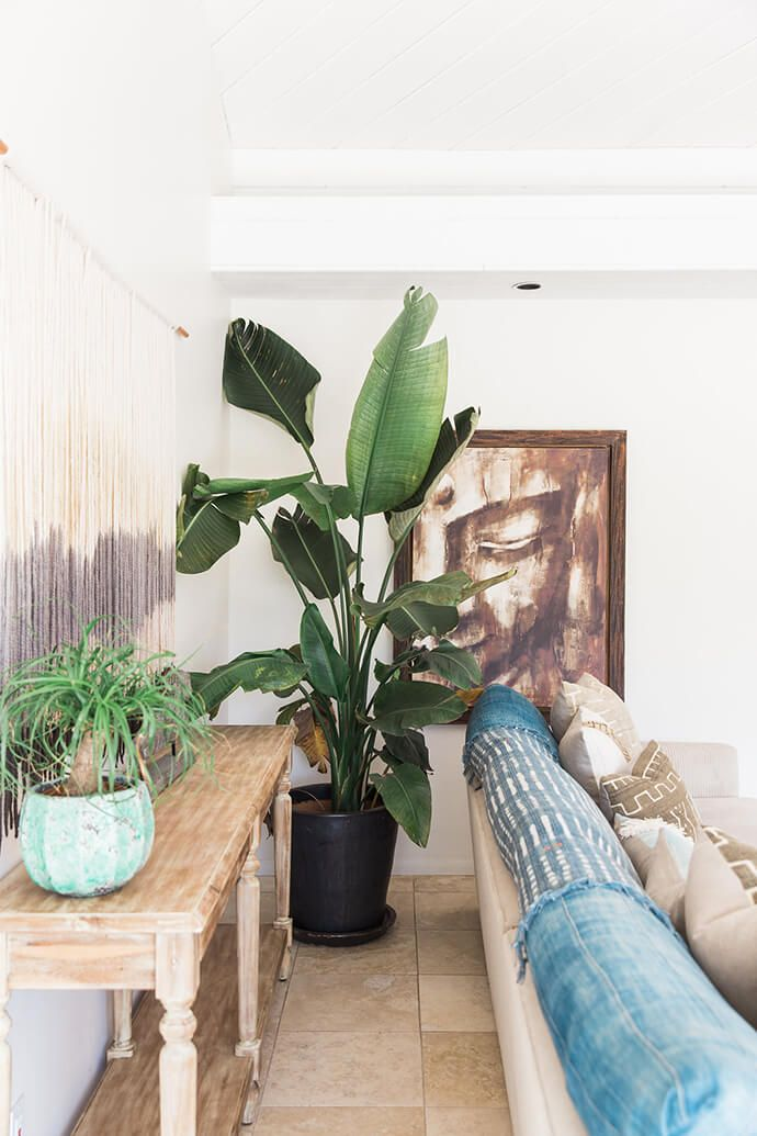 Living room with a large indoor plant